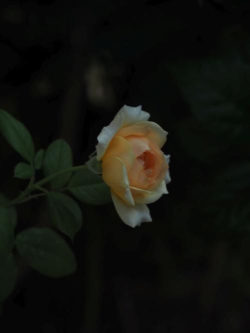 P9170414