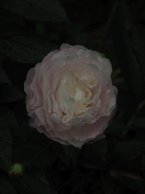 P5162086