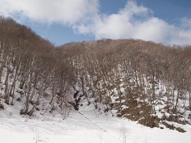 P3103923yukinozoukibayasi